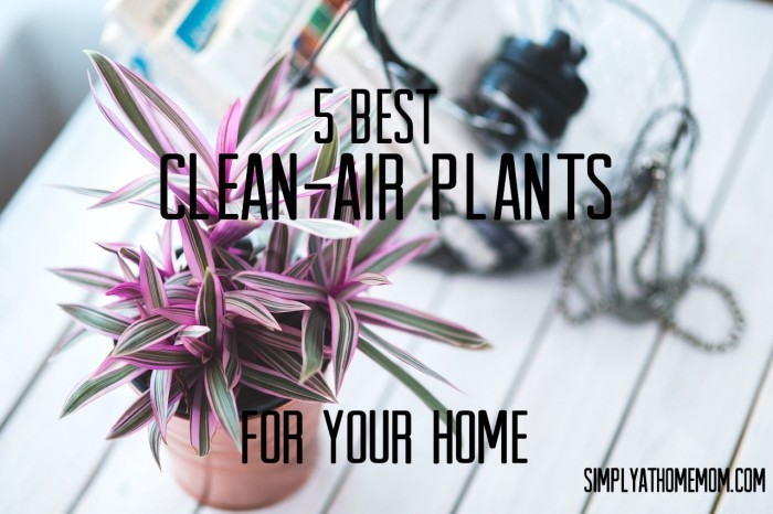 clean-air plants